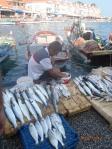 Profesyonel kıyı balıkçısı sabah avladığı balıklarını sergiliyor. (c) SAD-EKOG N.O. Veryeri