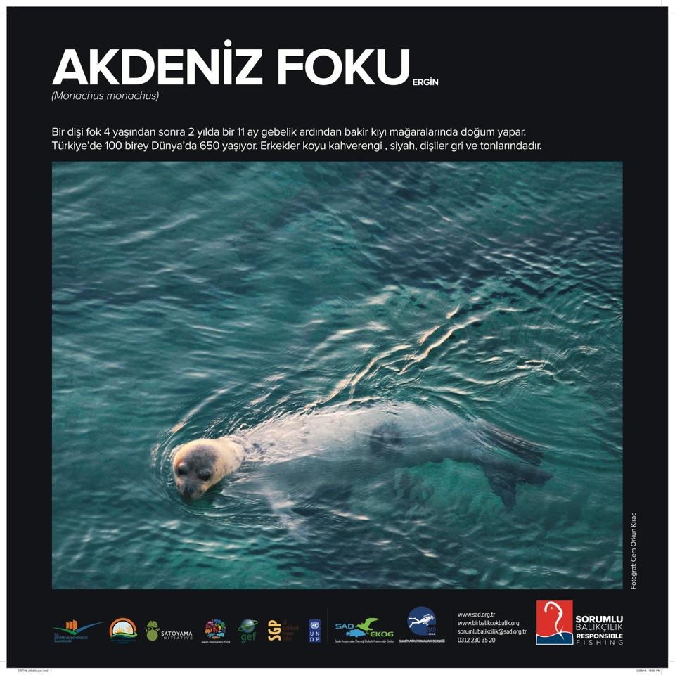 SAD-EKOG_Sorumlu Balikcilik_Akdeniz foku